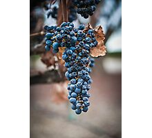Grape Cluster Photographic Print