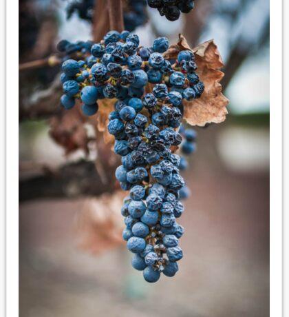 Grape Cluster Sticker