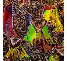 Palm Colours Photographic Print