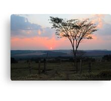 sunset with silhouetted tree Canvas Print