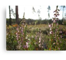 Wild Heather Canvas Print