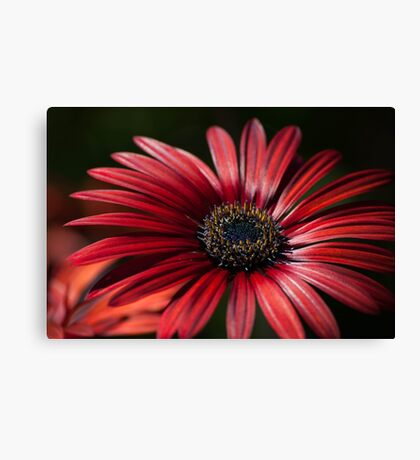 Red Beauty Canvas Print