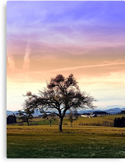 Old tree and amazing cloudy sky | landscape photography by Patrick Jobst