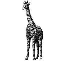 Ornate Giraffe Photographic Print