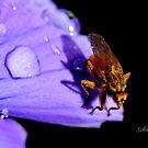 Just Buzzin' Around... by Rosemary Sobiera
