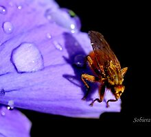 Just Buzzin' Around... by Rosemary Sobiera