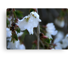 A Background Of Blossoms Canvas Print