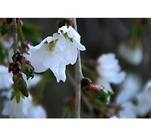 A Background Of Blossoms Photographic Print