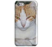 Stray Cat iPhone Case/Skin