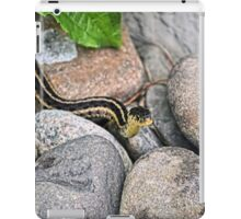 Eastern Garter Snake iPad Case/Skin