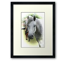 Beautiful New Forest Pony Framed Print