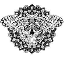Skull Moth Photographic Print