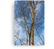 Carolina Winter Trees Canvas Print