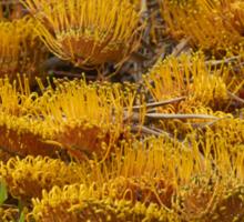Silky Oak (Grevillea robusta) Sticker