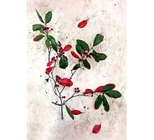 Feative Red Berries Photographic Print