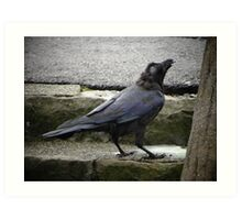 A crow in Hakone Art Print