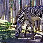 Stripes, Stripes and More Stripes... by RichImage