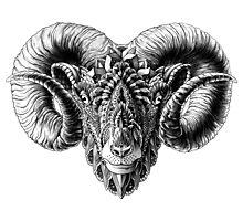 Ram Head Photographic Print