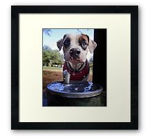Dogs with game face on .25 Framed Print