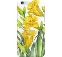 Yellow Day Lillies iPhone Case/Skin