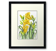 Yellow Day Lillies Framed Print