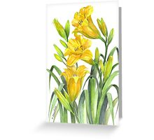 Yellow Day Lillies Greeting Card