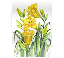 Yellow Day Lillies Poster