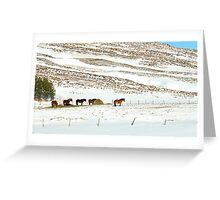 Icelandic Horses on Winter Landscape in Iceland Greeting Card