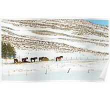 Icelandic Horses on Winter Landscape in Iceland Poster