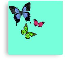 The Colored Butterflys Canvas Print