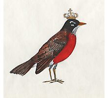 Regal Robin Photographic Print
