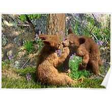 Kissing Cubs Poster