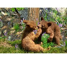 Kissing Cubs Photographic Print