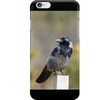Crow Hybrid  iPhone Case/Skin