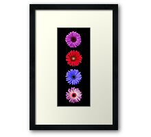 Lovely Gerbera Daisys Framed Print