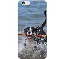 Dog Days Of Summer iPhone Case/Skin