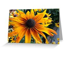 Rudbeckia from A Gardener's Notebook Greeting Card