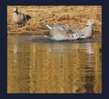 Cape Turtle Dove - Summer Swim - African Wild Birds Kids Clothes