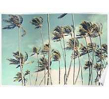 Hawaii Palm Trees In The Wind Poster