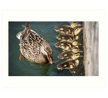 Getting Your Ducks In A Row.... Art Print