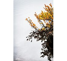 Fagus in Fog Photographic Print