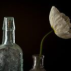 Poppy White - Still Life by Clare Colins
