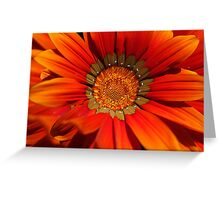 Macro capture of Orange Zinnia flower Greeting Card