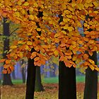 Top selling . Views: 16249  ♥ ♥ ♥ ♥ series . Forever Autumn   . Eye-catcher - For Sure ! Fav: 76.  Thx friends ! muchas gracias !!! This image Has Been S O L D . Buy what you like!  by © Andrzej Goszcz,M.D. Ph.D