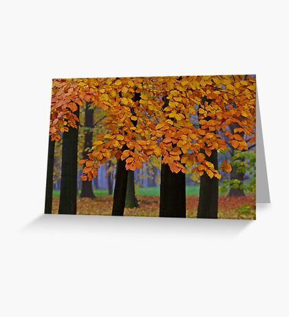 Top selling . Views:23572 ♥.  Forever Autumn   . Eye-catcher - For Sure ! Fav: 76.  Thx friends ! muchas gracias !!! This image Has Been S O L D . Buy what you like!  Greeting Card