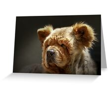Chow-Chow portrait Greeting Card