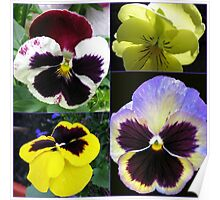 Cute Pansy Faces Collage Poster