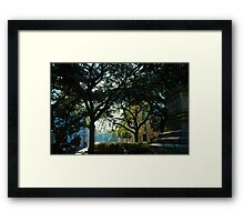 Savannah Oaks Framed Print