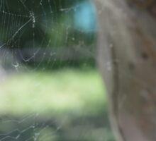 Spider web/telaraña Sticker
