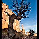 Old Tree and redrock cliffs by Tim McGuire